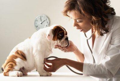 Vergiftung Hund Behandlung