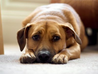anzeichen rattengift hund